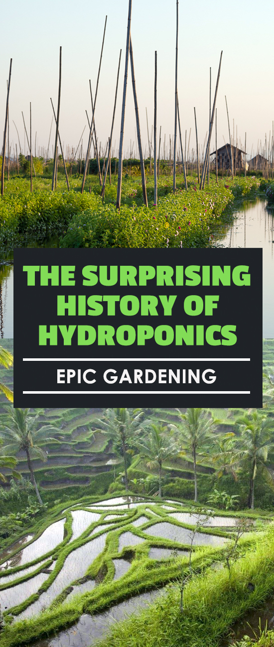 Learn the history of hydroponics to see how you can benefit from years of scientific study to easily grow food in your own home.