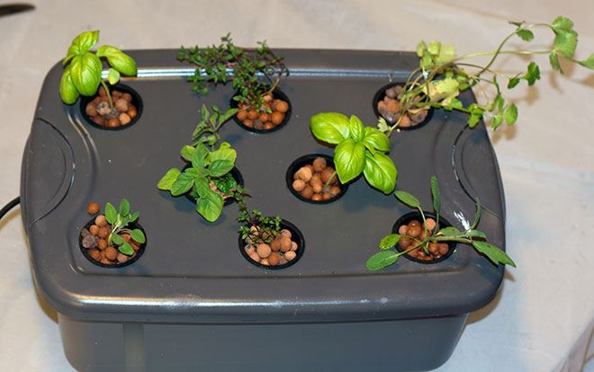 Hydroponic Herb Garden Guide Grow Fresh Herbs Year Round