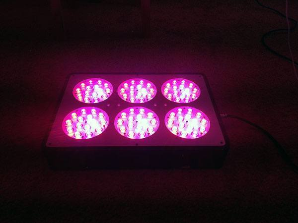 hydroponic-led-lighting