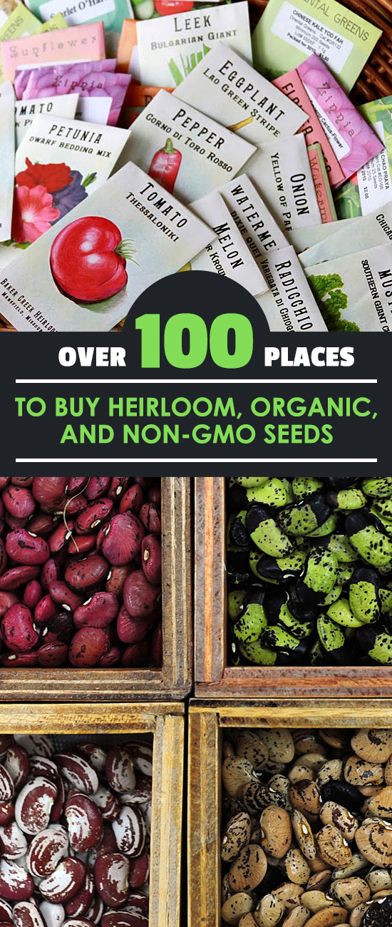 It's hard to know if you're buying non-gmo seeds, organic seeds, heirloom seeds, or a mix! Here's a list of 100+ reputable suppliers from around the USA.