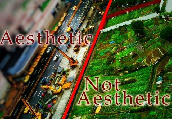 aesthetic-garden