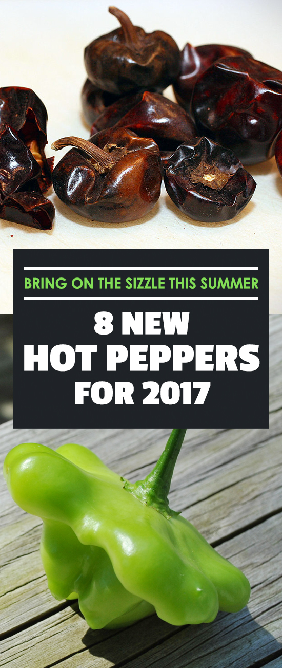 These hot pepper varieties are new in 2017 - give them a try and see if you can handle the heat.