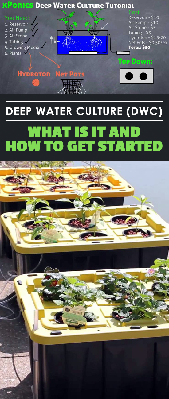 Deep water culture is one of the simplest ways to get into growing plants hydroponically, but it sounds very confusing and complex. Let's break it down!