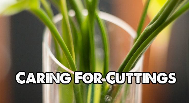 Caring for Your Plant Cuttings