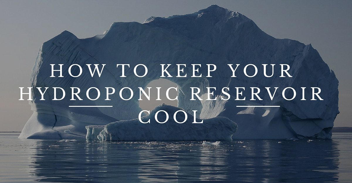 How to Keep Your Hydroponic Reservoir Cool
