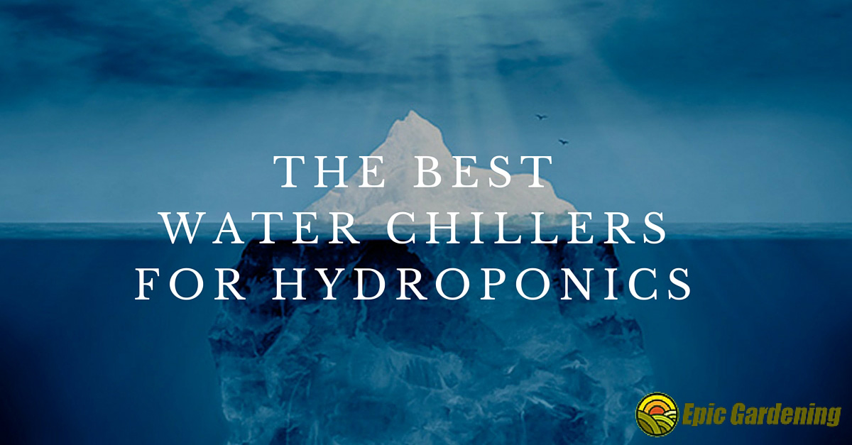 The Best Water Chillers for Hydroponics