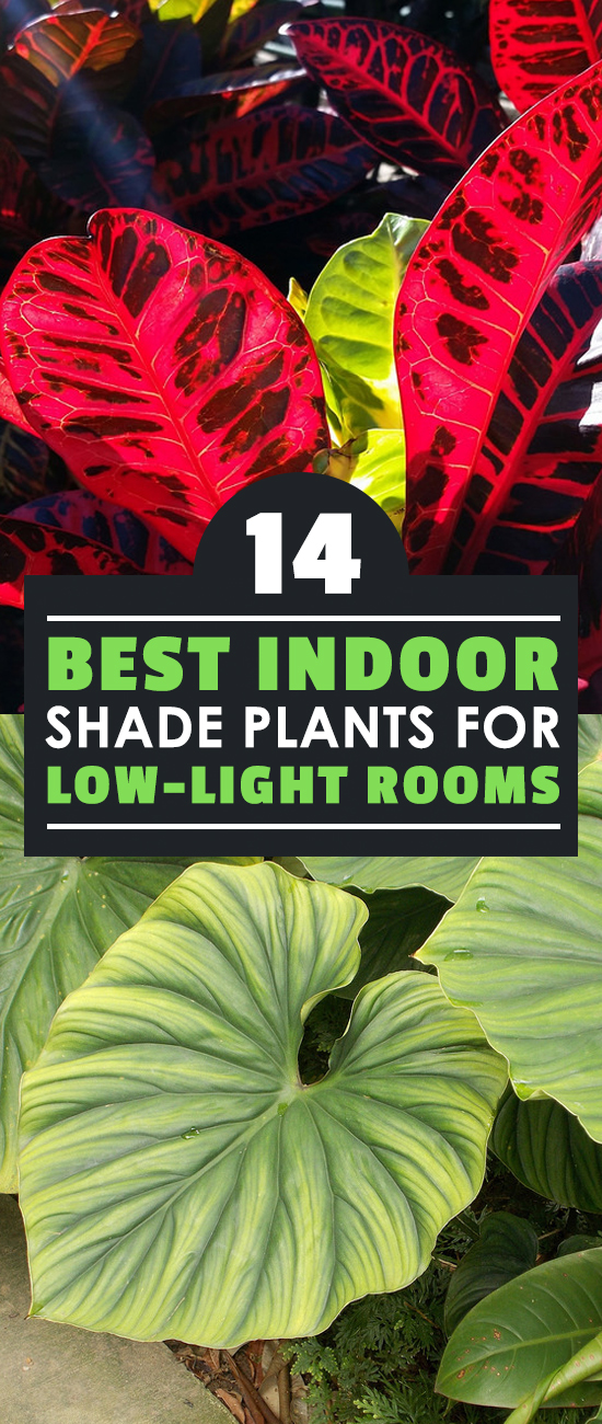 If you're not sure what indoor shade plants to grow at home, check this out. I've picked the 14 best shade plants for the home, no matter where you life.