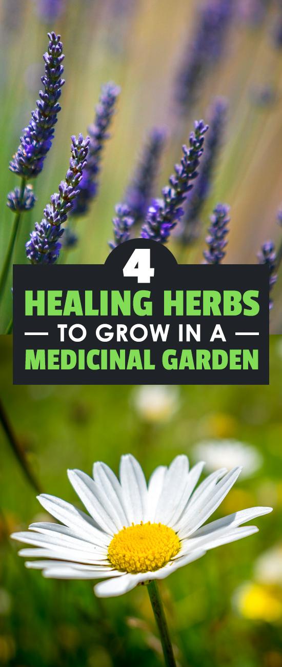 4 Healing Herbs To Grow In A Medicinal Herb Garden