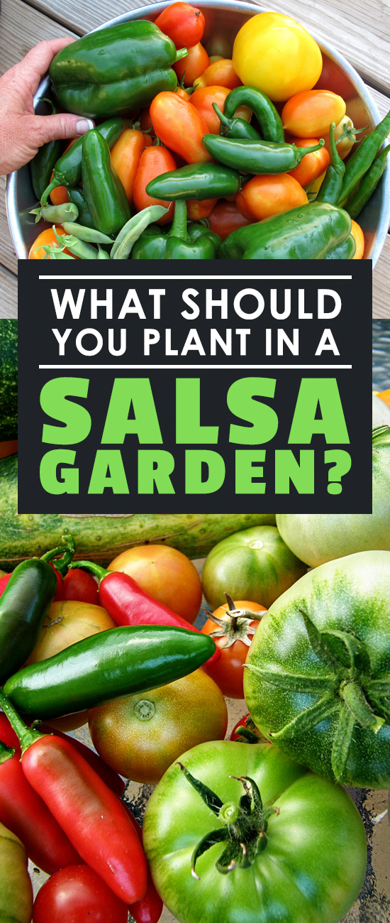 Once summer hits, there's nothing better than planting a salsa garden for fresh, delicious ingredients you can use to make incredible salsa! Learn how here.