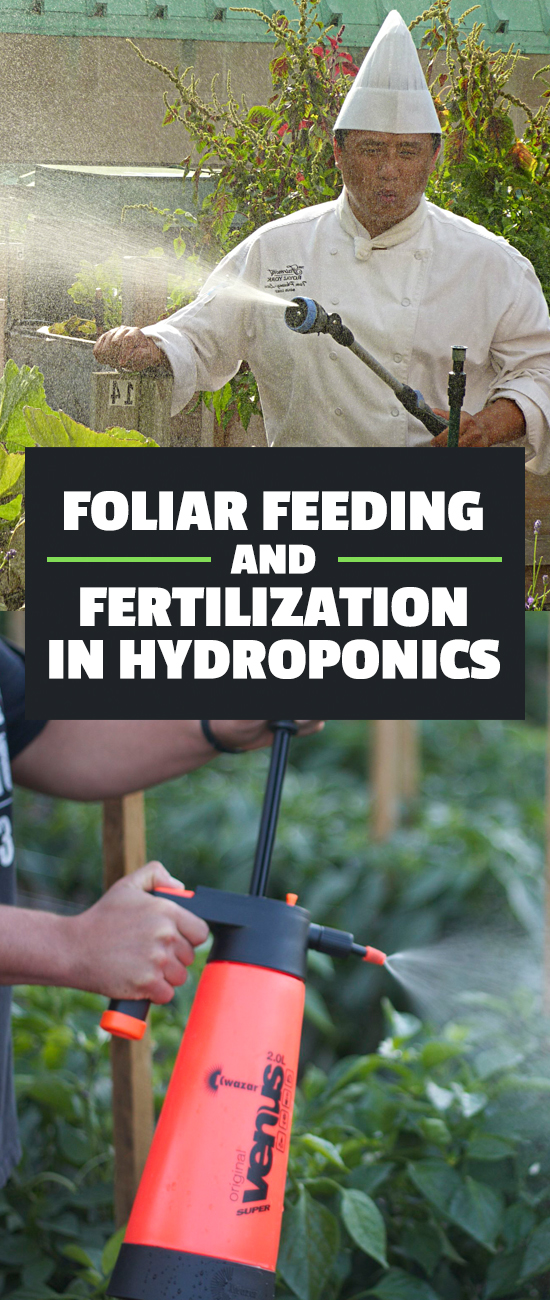Foliar feeding and fertilization is an often-overlooked technique to improve your yield and troubleshoot pesky plant nutrition problems.