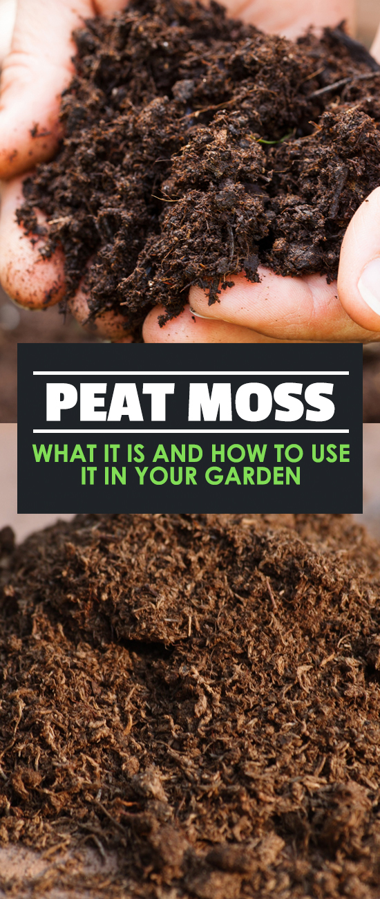 Peat moss what it is and how to use it in your garden for Garden soil meaning
