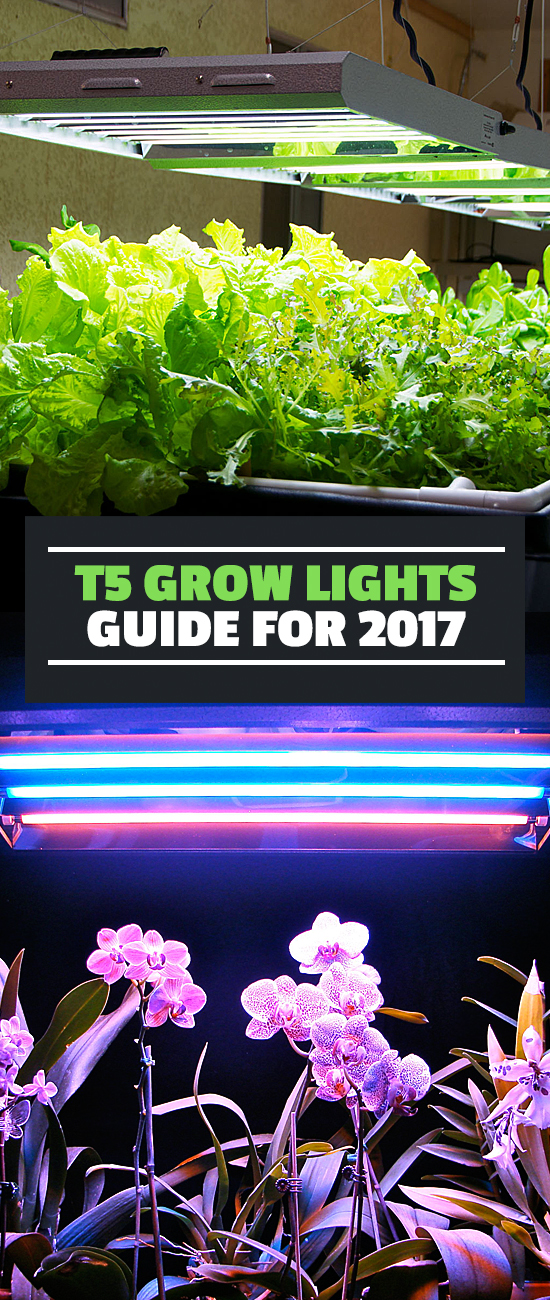 In this T5 grow light guide, learn which T5 grow lights are the best, why they're a good choice for your garden, and how to pick the right one.
