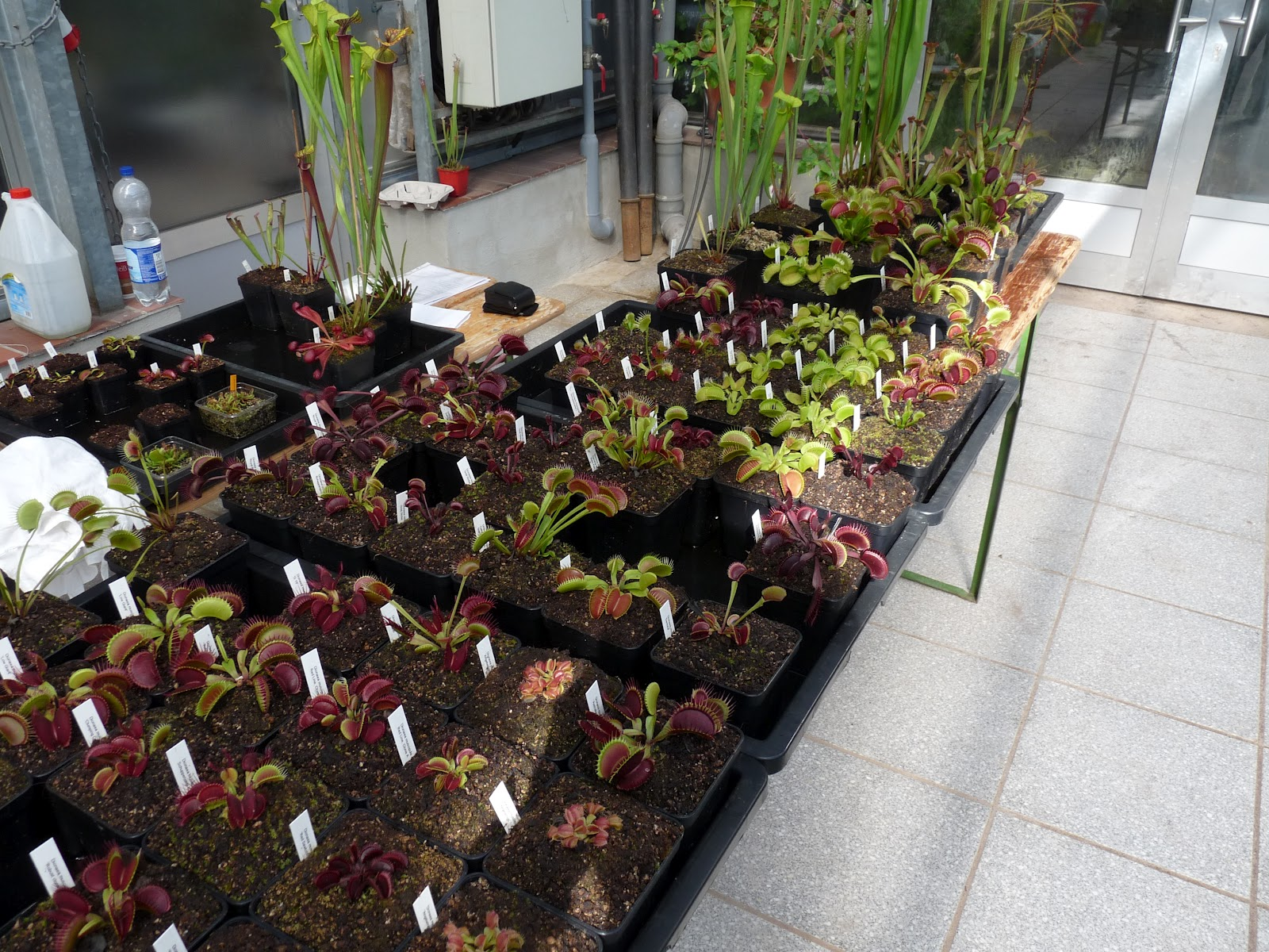 Where to buy carnivorous plants