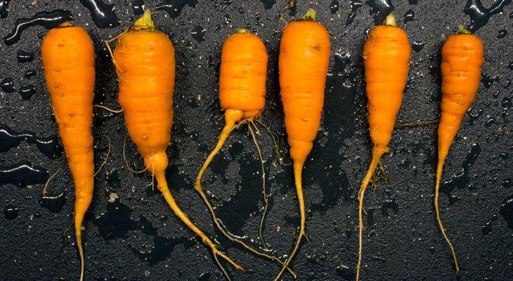 Preserving Carrots