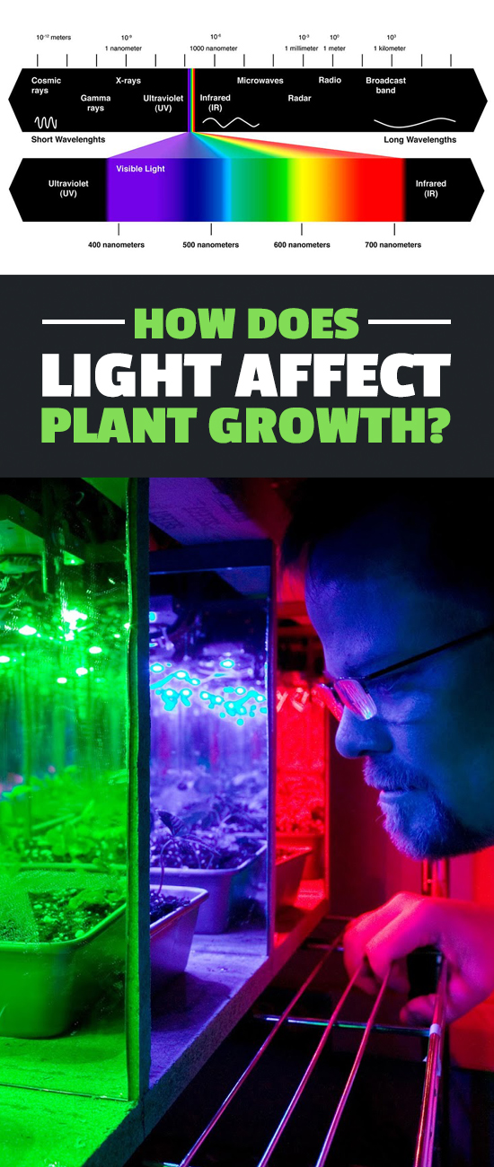 Learning how light affects plant growth is the first step to becoming a better indoor or outdoor gardener. Check out this quick article for the inside scoop!