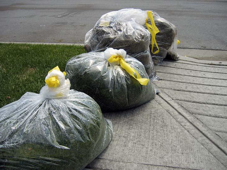 Neighbor's grass clippings mulch