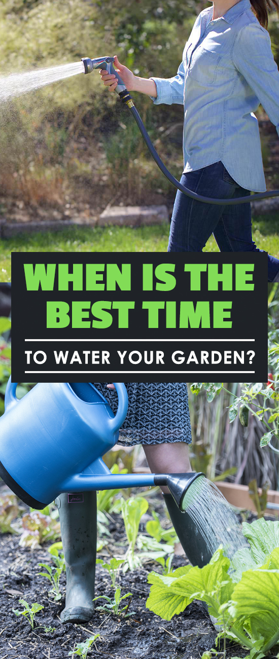 when is the best time to water your garden