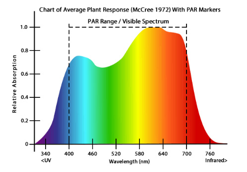 Metal Halide plant response to light spectra