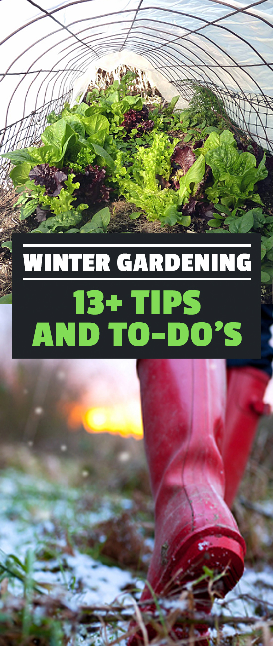 You may not think there's much to do in the winter, but you'd be wrong! Winter gardening is possible with these tips and to-do's. Get a head start on spring!