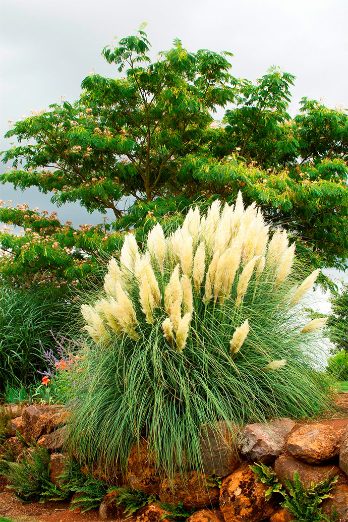 29 ornamental grasses and how to grow them for Blue ornamental grass varieties