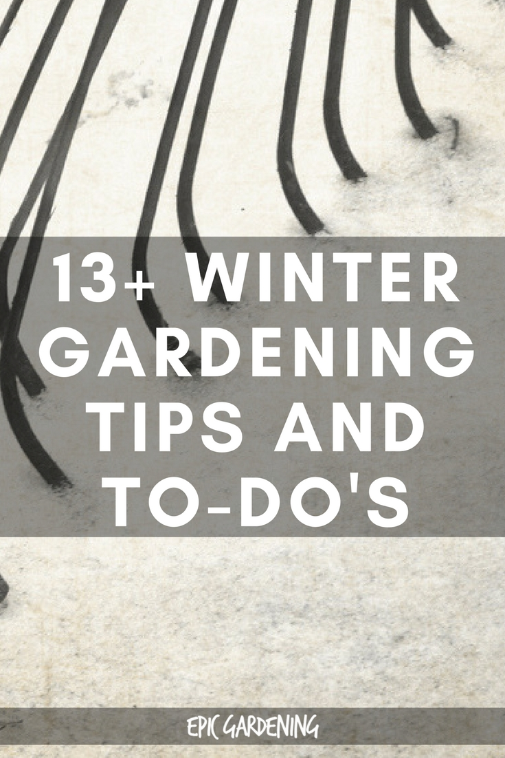 Winter Gardening Tips and To-Do's