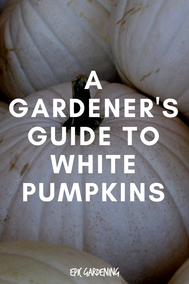 White Pumpkins: A Gardener's Guide
