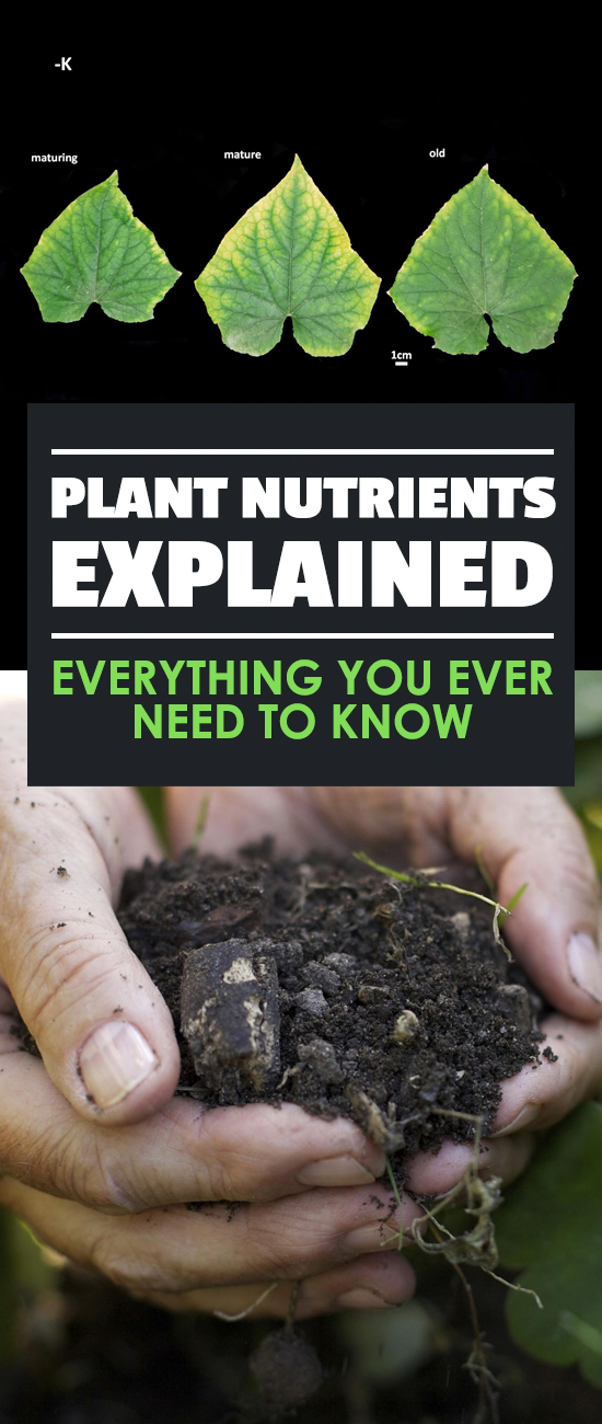 Plant nutrients are more than the NPK numbers you see on fertilizer products. Learn the importance of secondary and trace elements in this guide.