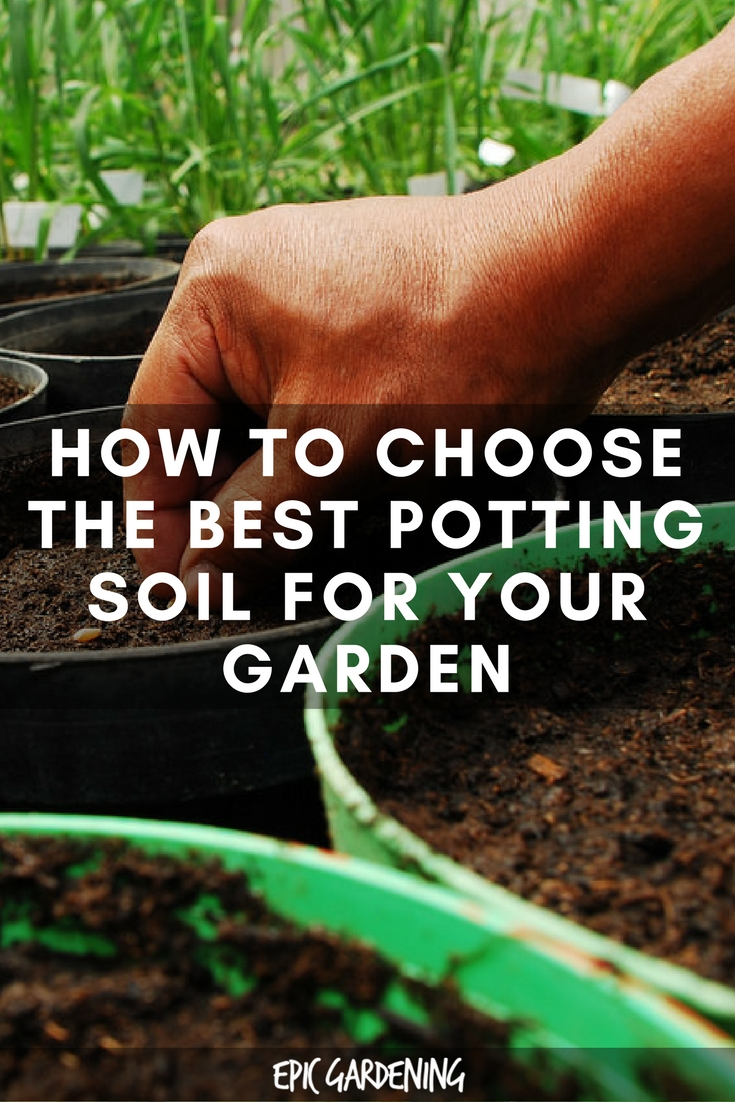 How to Choose the Best Potting Soil