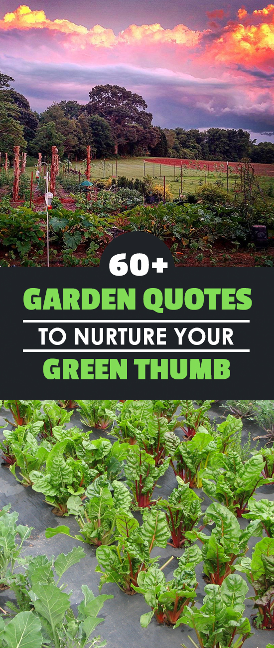 gardening and green thumb Serving burlington, oakville, and mississauga with superior, full service garden/lawn maintenance and landscaping since 1971 green thumb landscaping is your trusted partner in creating beautiful gardens and tranquil landscapes.