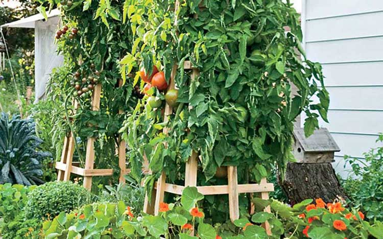 Stylish Tomato Tower