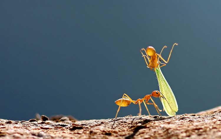 How to Kill Ants